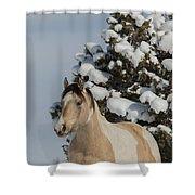 Mustang Winter Shower Curtain