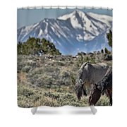 Mustangs In The Sierra Nevada Mountains Shower Curtain