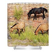 Mustangs Shower Curtain