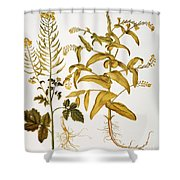Mustard Plant, 1613 Shower Curtain