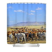 Mustering Passed The Cockburn Ranges Shower Curtain