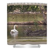 Mute Swan         St. Joe River          June         Indiana Shower Curtain