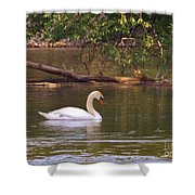 Mute Swan     Image 2      Spring        St. Joe River          Indiana Shower Curtain