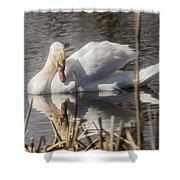 Mute Swan - 3 Shower Curtain