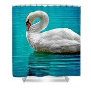 Mute Swan 4 Shower Curtain