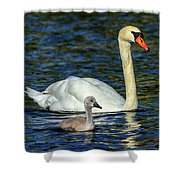 Mute Swan, Cygnus Olor, Mother And Baby Shower Curtain