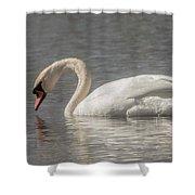 Mute Swan Shower Curtain