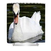 Mute Swan Feathers Of Lake Junaluska North Carolina  Shower Curtain