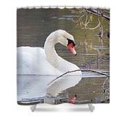 Mute Swan I Shower Curtain