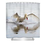Mute Swan Landing I Shower Curtain