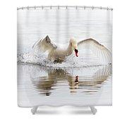 Mute Swan Landing II Shower Curtain