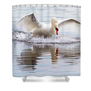 Mute Swan Plunge Shower Curtain