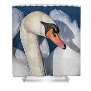 Mute Swan Portrait Shower Curtain
