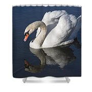 Mute Swan Reflected Shower Curtain