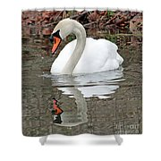 Mute Swan Reflecting Shower Curtain