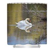Mute Swan Reflection Shower Curtain