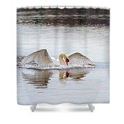 Mute Swan Swim Shower Curtain