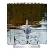 Mute Swan Swimming Away Shower Curtain