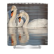 Mute Swans Shower Curtain