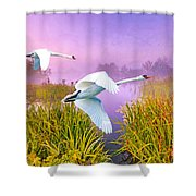 Mute Swans Over Marshes Shower Curtain
