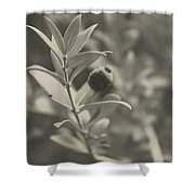 Muted Beauty 3 Shower Curtain