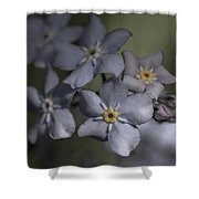 Muted Forget Me Not  Shower Curtain