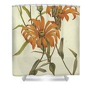 Mutisia Decurrens Shower Curtain