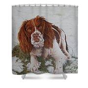 Muttley-the Best Springer Spaniel Shower Curtain