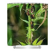 Mutualism - Ants And Treehoppers Shower Curtain