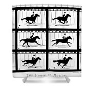 Muybridge: Horse Shower Curtain