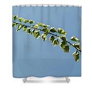 My Bougainvillea Aurea 1 Shower Curtain