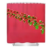 My Bougainvillea Aurea 4 Shower Curtain