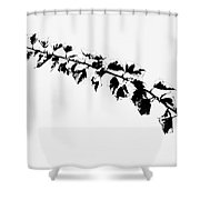 My Bougainvillea Aurea 5 Shower Curtain