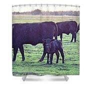 My Calf Shower Curtain