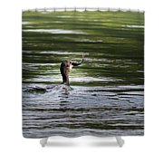 Cormorant - My Catch For The Day Shower Curtain
