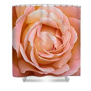 My Daily Rose Shower Curtain
