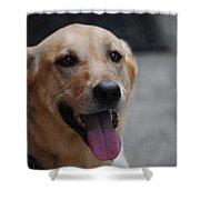 My Dog Ubu Shower Curtain