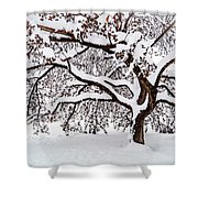 My Favorite Tree In The Snow Shower Curtain