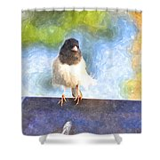 My Feathers Shower Curtain