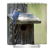 My First Bluebird Shower Curtain