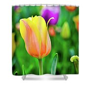 My First Tulip Shower Curtain
