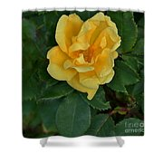 My First Yellow Rose Shower Curtain