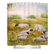 My Flock Of Sheep Shower Curtain