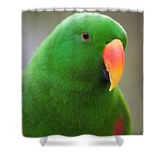 My Friend Kazuko Shower Curtain