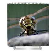 My Friend Vince The Dragonfly Shower Curtain