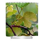 My Grapvine Shower Curtain