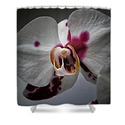 My Growling Dragon Orchid. Shower Curtain