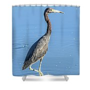 Erect Walking Tricolored Shower Curtain