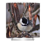 My Little Chickadee Shower Curtain