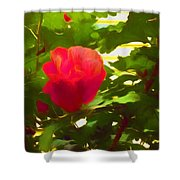 My Love Is Like  A Red Red Rose Of Sharon Shower Curtain